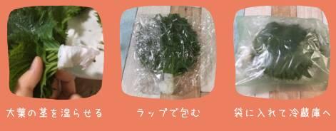大葉の冷蔵庫の保存方法画像